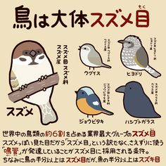 "高橋のぞむ@小鳥スタンプ発売中さんのツイート: ""今日から使える動物豆知識… "" Bird Pictures, Animal Pictures, Cute Pictures, Funny Animals, Cute Animals, Bird Party, Pretty Animals, Kemono Friends, Animal Species"