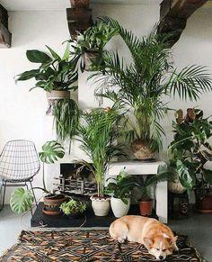 plants + corgi