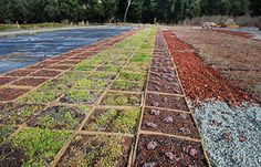 Bio Tray Modules - Planted