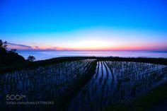 Blue Hour over Rice Fields by Yokai