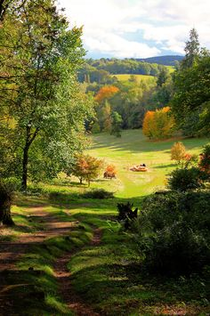 Visit me at http://www.amit.gallery , http://www.amit.tube , From Pinterest Winkworth Arboretum, England (by Tim Stocker)