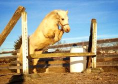 Pro Tips for Taking Stunning Horse Photos with Your Smartphone - Horse Collaborative