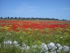 Spring in Salento, Southern italy theapuliantemple.com