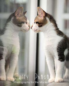 18 Pet Portrait Ideas From spectrumphotographytips.com