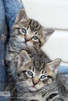 Kittens by ShutterMay. For more photos: http://photos-cats-kittens.tumblr.com @go4fotos