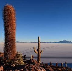 Who likes to watch the sunrise? I love it particularly in beautiful places as this one Isla Incahuasi in the Salar de Uyuni the world's largest salt flat. I'll treasure this magical moment forever. What about you?  I am hoping to hear all about your sunrise magical moments ! #uyunisaltflats #salardeuyuni #theglobewanderer #travel_captures #backpacker #travelawesome #travelblogger #travelgram #travelphotography  #wanderlust #wonderful_places #worldplaces #awesome_earth #solotraveller…