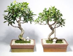 How To Grow and Prune Bonsai --> http://www.hgtvgardens.com/trees/how-to-grow-bonsai?soc=pinterest
