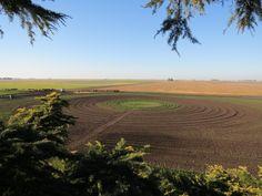 Plantación de frambuesas en círculo