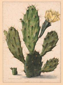 flowers-Collected works of Amy Lavine - All Rijksstudio's - Rijksstudio - Rijksmuseum