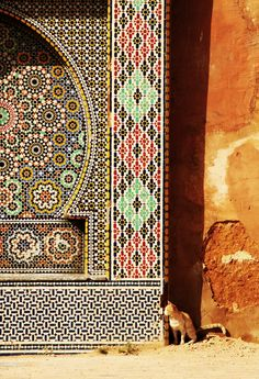Kitty in Morocco