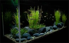 black pebble aquarium - Google Search