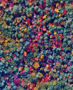 A colorful blanket of treetops is visible in Bow, New Hampshire. With the arrival of colder temperatures each year, leaves begin to change their colors, creating marvelous views like this from above. Small Pink Flowers, Red Flowers, Pale Blue Dot, Cold Temperature, Image Of The Day, Foto Art, Growing Plants, New Hampshire, Flower Power
