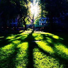 #light #sunset #sunritual #washingtonsquarepark #nyc - http://washingtonsquareparkerz.com/light-sunset-sunritual-washingtonsquarepark-nyc/