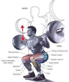 Musculos movimentados no agachamento fundo