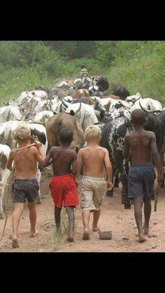DAILY TREND: Video of the year: Two white boys bare chested and bare footed herding cattle in Africa.