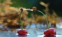 snail smooches