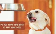 How Much to Feed Your Dog: Importance of an Ideal Weight | SlimDoggy