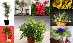 Guia do Jardim: 30 plantas para quem não tem tempo | SOS Solteiros
