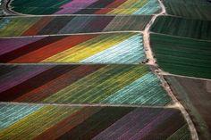 Cut flower fields, Carlsbad, CA 1989. Exploring farms from above – CNN Photos - CNN.com Blogs
