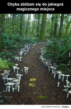 A fungi path located at the Cloud Mountain Retreat in Washington. I've never seen fungi used in the landscape like this - amazing! Beautiful World, Beautiful Places, Garden News, Mushroom Fungi, Mushroom Seeds, Foto Art, Belleza Natural, Science And Nature, Stuffed Mushrooms