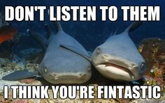 """""""Don't listen to them. I think you're fintastic!"""" Funny Animal Memes, Funny Animal Pictures, Funny Animals, Funny Quotes, Funny Memes, Animal Pics, Animal Humor, Shark Pictures, Animal Captions"""