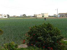 La Universitat reclama la paralització del PGOU de València per tal de protegir l'Horta Valencia, Portal Web, Plants, Vegetable Garden, Plant, Planets