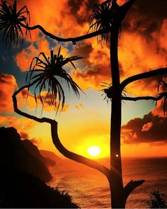 Palm trees bend into the sunset