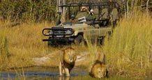 Le Cap Kruger Safari Afrique du Sud - Voyageurs du Monde