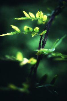 .green.