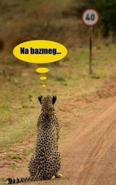 😂😂😂 Fuck that (Bazdmeg is the most used hungarian curse word. Wtf Funny, Funny Fails, Funny Images, Funny Photos, Cute Baby Animals, Funny Animals, Hahaha Hahaha, Animal Memes, Funny Comics