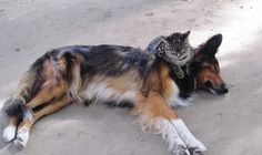 Even cats and dogs fall in love in Paris!