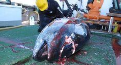 Combatir la pesca ilegal - http://verdenoticias.org/index.php/blog-noticias-diversidad-biologica/138-combatir-la-pesca-ilegal
