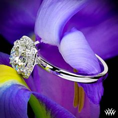 """I THINK THIS IS ABSOLUTELY PERFECT!!!!!!!! Named after a beauty of old, the 'Guinevere' Solitaire Engagement Ring combines a simple idea with high style. A square halo with rounded edges containing A CUT ABOVE ® Hearts and Arrows Diamond Melee (approx. 0.12ctw; F/G VS) surround your diamond held by double split prongs to complete the look. The combination of a half round and comfort fit shank ensure that this ring is comfortable at all times. This is a great companion to our """"Guinevere Pave""""…"""