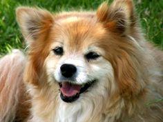 Top Ten Popular Dog Names of 2014
