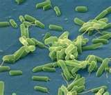 A revolutionary new concept --the bacteria in our bodies is essential to our health -- is only just filtering down into modern day obstetrics. The health of our next generation depends on it. What Is Bacteria, Gut Health, Health And Wellness, Health Matters, Health Tips, Mental Health, Flesh Eating Bacteria, Gut Bacteria, Fungi