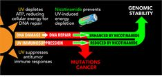 Nicotinamide for Skin Cancer Chemoprevention - SkinCancer.org