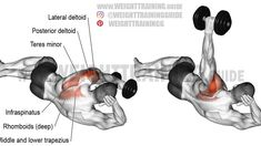 Side-lying dumbbell rear delt raise exercise instructions and videos - Fitness and Exercises Deltoid Workout, Dumbbell Workout, Dumbbell Exercises, Weight Exercises, Fitness Exercises, Gym Workout Tips, Weight Training Workouts, Cardio Workouts, Workout Fitness