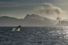The Whale & The Fire.Hermanus