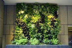 plantas iluminadas