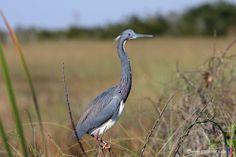 everglades national park   17.02.2009 - 10. Tag Everglades National Park
