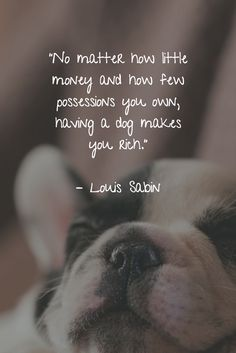 There are no words to fully describe what dogs mean to us. However, these dog quotes about love and loyalty come about as close as you can get. Cute Dog Quotes, Puppy Quotes, Animal Quotes, Dog Qoutes, Pet Quotes, I Love Dogs, Puppy Love, Cute Dogs, Dog Poems