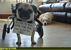 hahah! this has to be one of the greatest dog shames i have seen :)