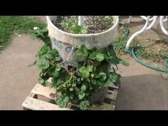 VR to GrowingyourGreens Vertical Growing with Phytopod Diy Waterfall, You Can Do, Vegetable Garden, Eco Friendly, Gardening, Plants, Projects, Waterfalls, Balcony