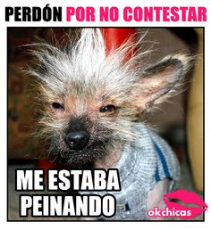 Funny Spanish Memes, Spanish Humor, Funny Animal Memes, Funny Quotes, Funny Memes, Hilarious, Rare Animals, Animals And Pets, Man Humor