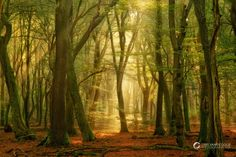 The Speulder forest, Holland, by Lars van de Goor