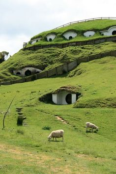 The houses from the Hobbiton scenes of the Lord of the Rings