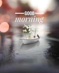 Good Morning Monday Images, Good Morning Images Flowers, Good Morning Saturday, Good Morning Images Download, Good Morning Picture, Good Morning Good Night, Morning Pictures, Best Good Morning Messages, Good Morning Coffee