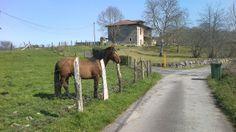 caballo en casa rural Finca el Palacio, Torín (Piloña), Asturias www.fincaelpalacio.com