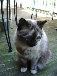 Mummy Cat on the front balcony: Cat #3