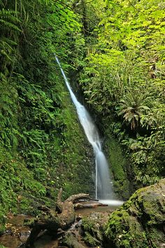 Auckland Falls, Peel Forest Park Scenic Reserve, Timaru District, Canterbury, New Zealand 1